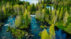 Aerial view of fast river in beautiful green spring forest in Finland